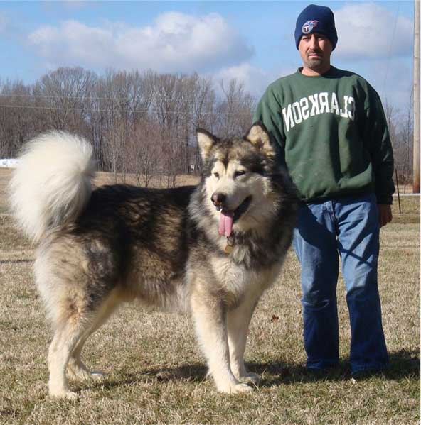 10 Largest Dog Breeds
