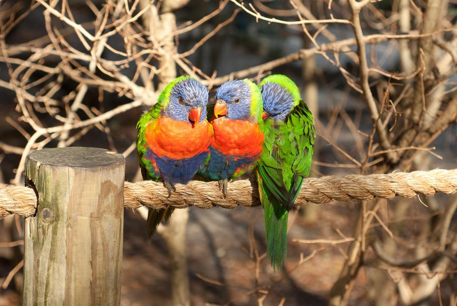 3 Little Birds Images
