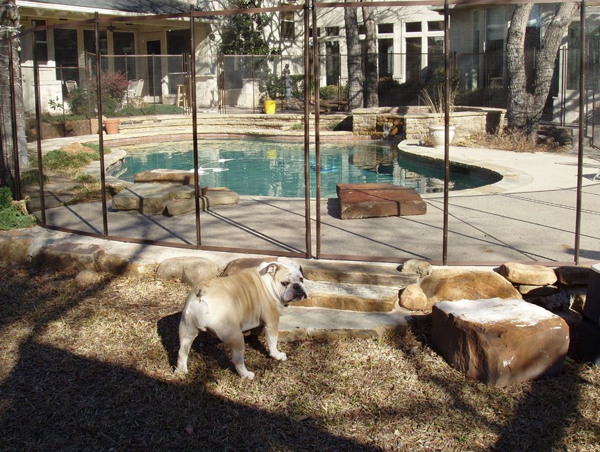 Above Ground Electric Fence For Dogs