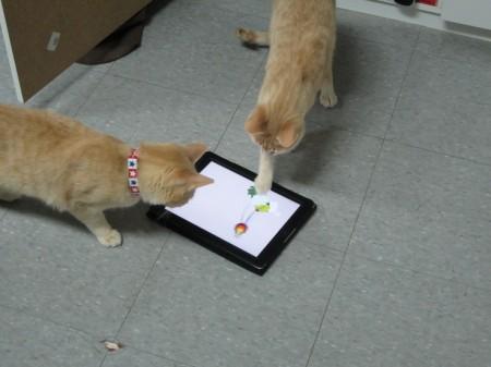 Adopt A Cat Poster