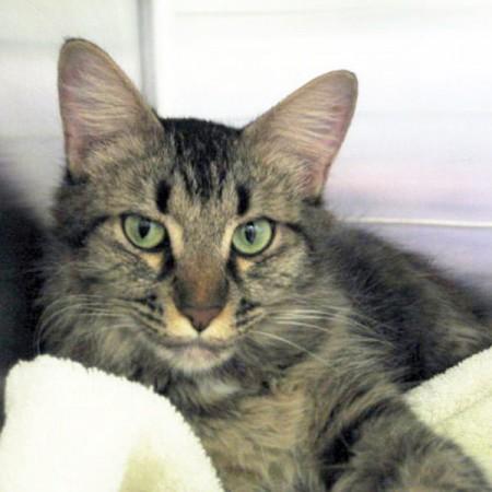 Adopt A Cat San Diego