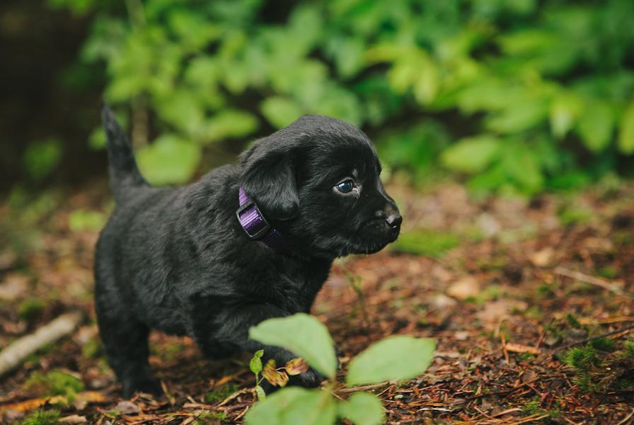 Adopt A Puppy Denver