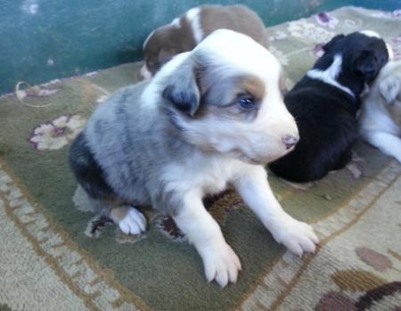 Adopt A Puppy Miami