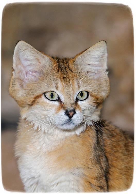 African Wild Cat Habitat