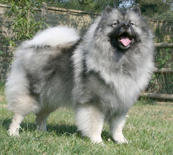 All Dog Breeds Pictures