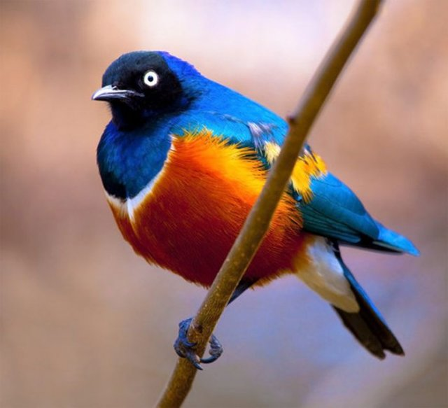 Amazing Facts About Birds With Pictures