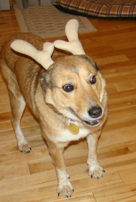 Antlers For Dogs Safe