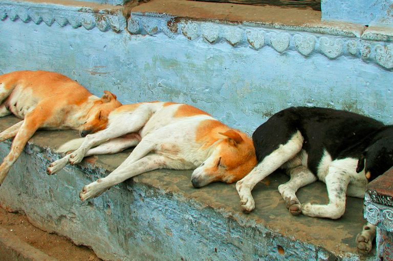 Benadryl For Dogs To Sleep