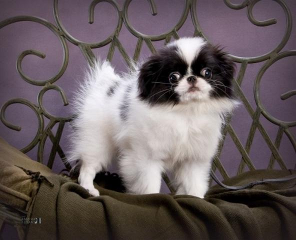 Best Dog Breeds For Pets