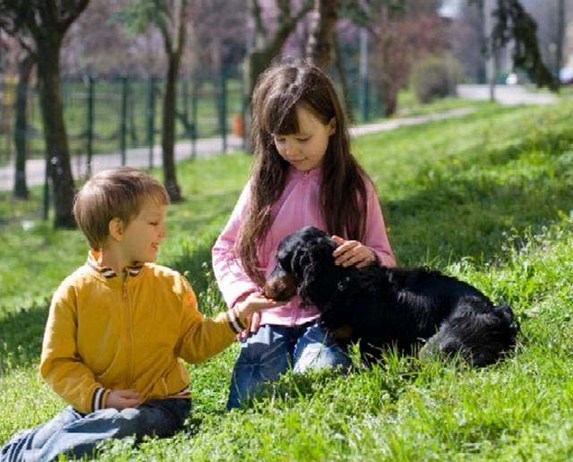 Best Dog For Kids And Other Dogs
