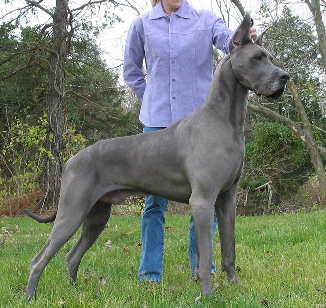 Best Dogs To Own List