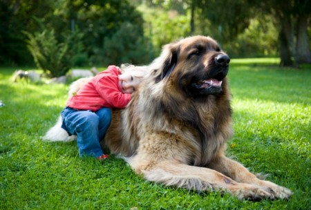 Best Dogs To Own With Kids