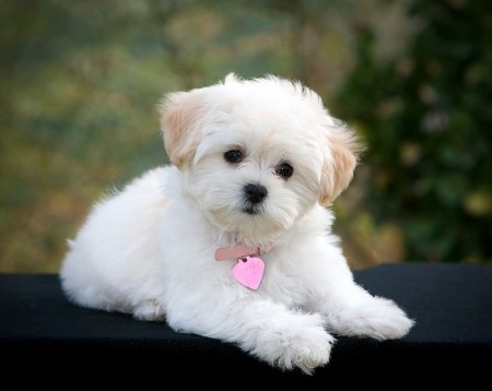 Best Family Dog Breeds Children