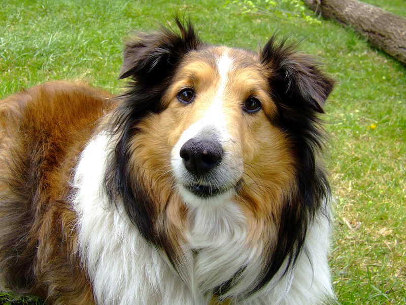 Best Family Dogs Breeds