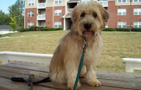 Best Family Dogs Medium Size