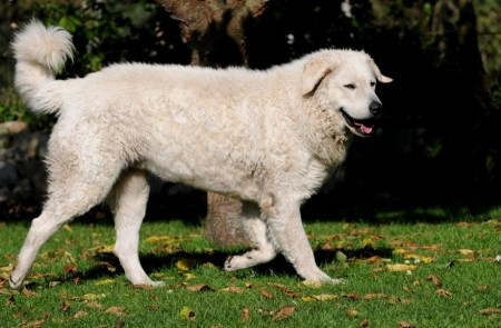 Best Guard Dog Breeds