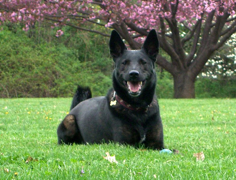Best Guard Dogs Pictures