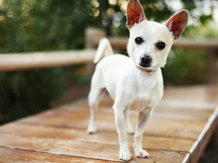 Best Small Dogs For Men