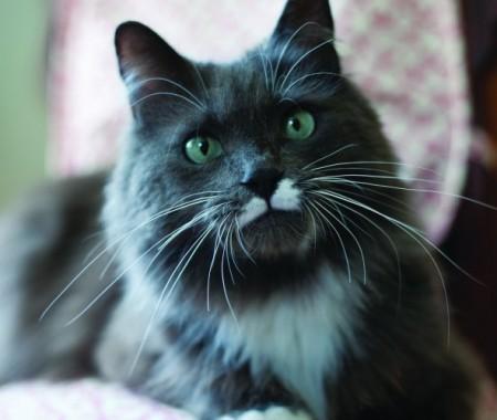 Big Cat Rescue California