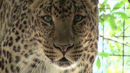 Big Cat Rescue Tampa