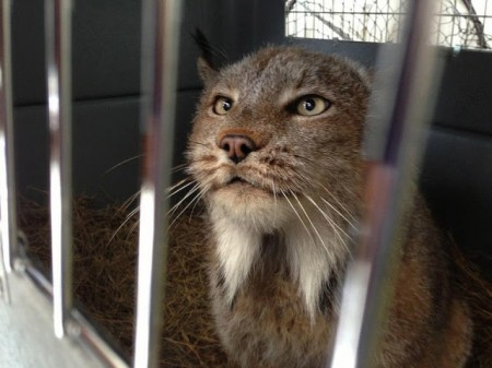 Big Cat Rescue Texas