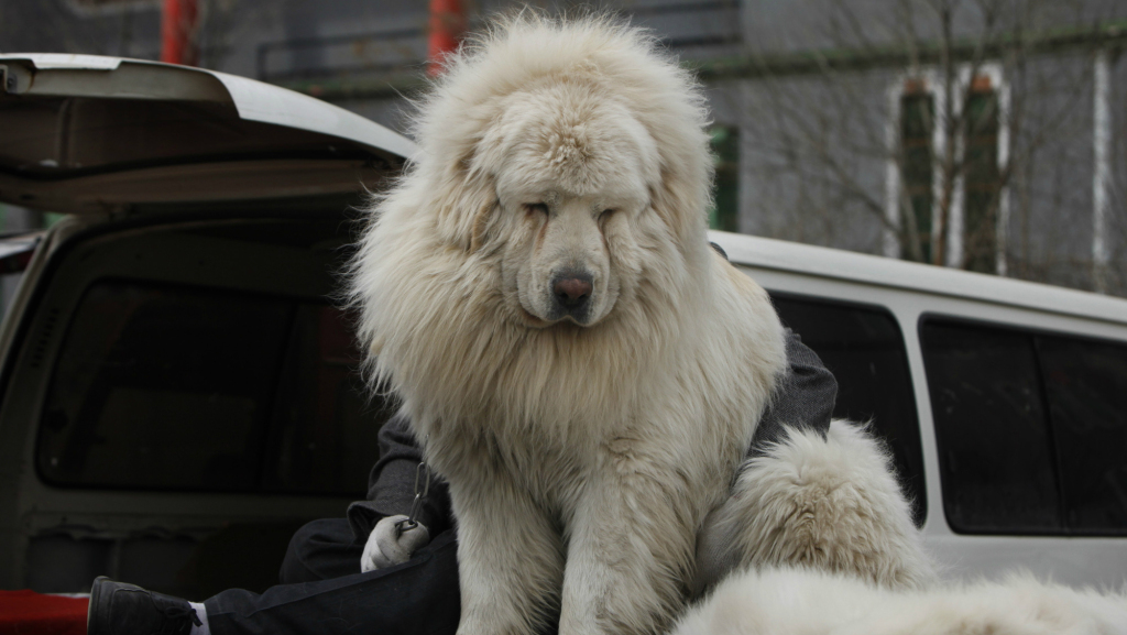 Big Chinese Dog Breeds