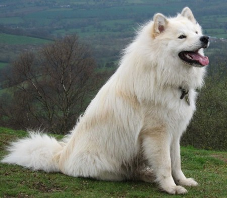 Big Huge Dog Breeds