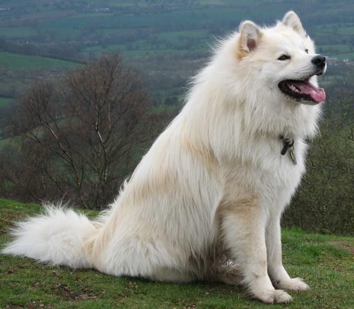 Big Huge Dog Breeds