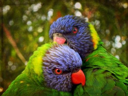 Birds Of America Lorrie Moore