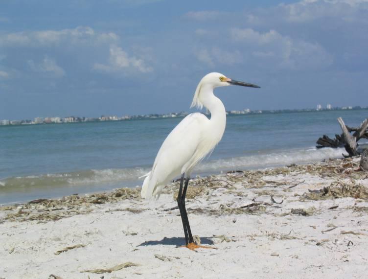 Birds Of Florida Beaches
