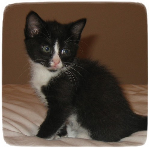 Black And White Cat Breeds