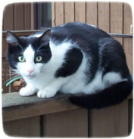 Black And White Cat Images