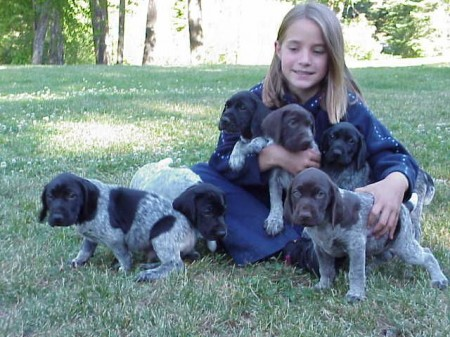 Black German Wirehaired Pointer Puppies