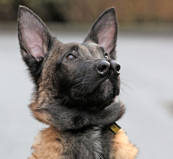 Breed Of Dogs With Two Noses