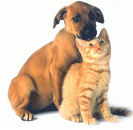 Cat And Dog Mating