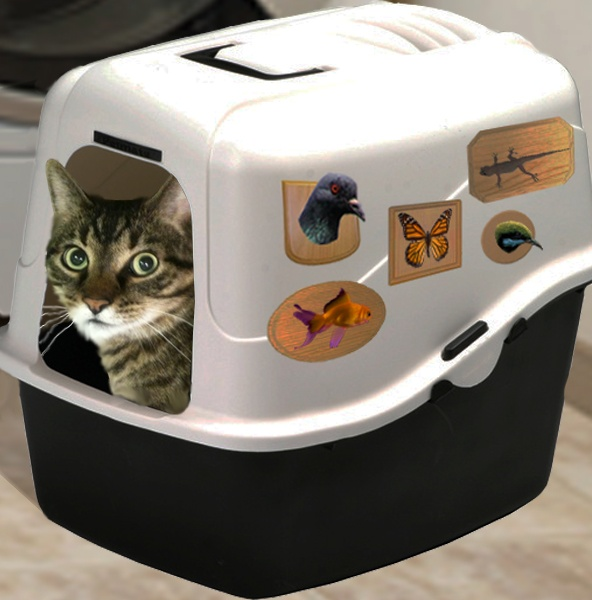 Cat Litter Box Diy