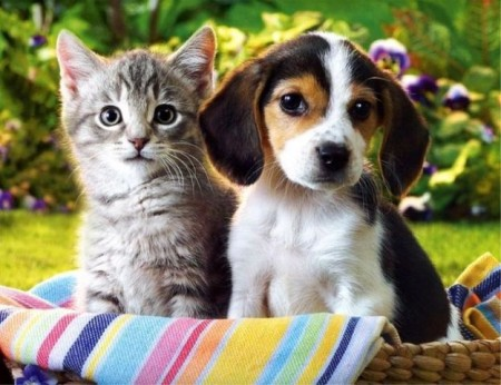 Cats And Dogs Living Together