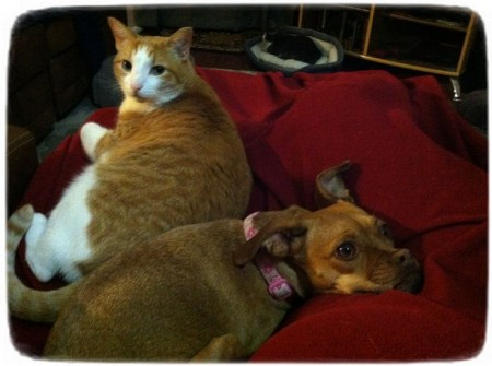 Cats And Dogs Living Together Pictures