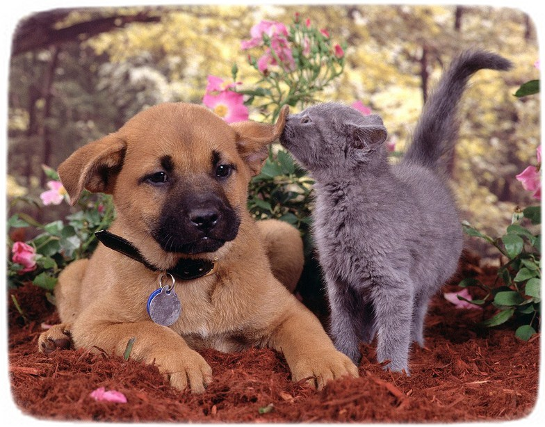Cats And Kittens And Dogs Wallpapers
