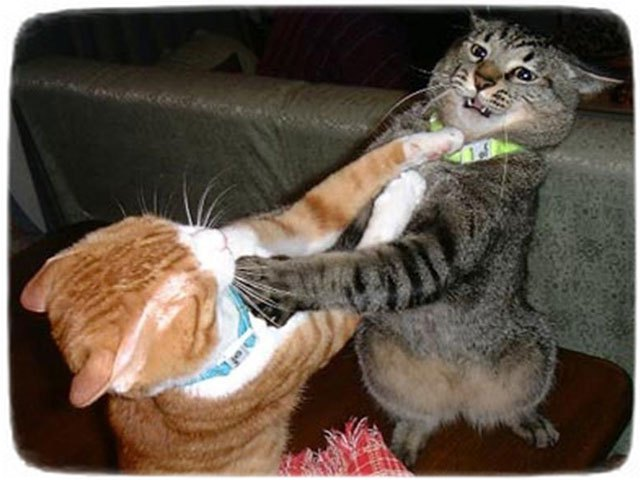 Cats And Kittens Playing Or Fighting