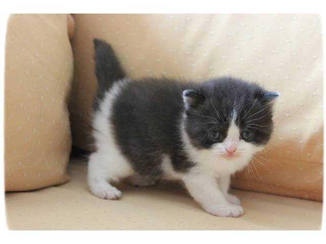 Cats For Adoption Singapore