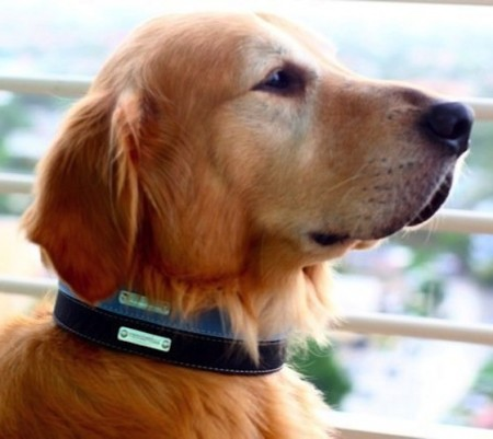 Cool Dog Collars Male