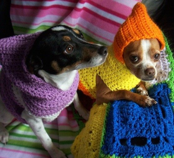 Crochet Dog Sweater For Small Dogs
