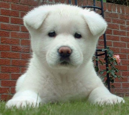 Cute Dog Breeds Big