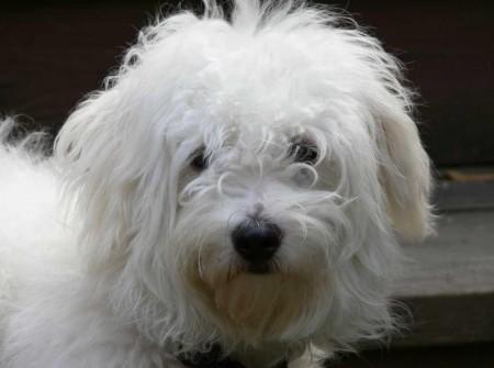 Cute Dog Breeds Medium