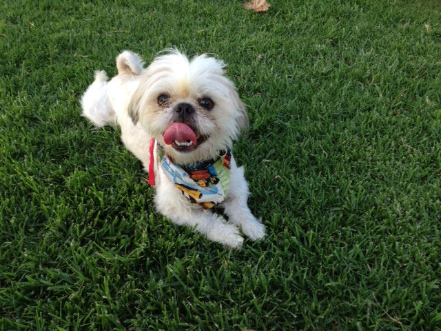 Cute Dog Collars For Male Dogs