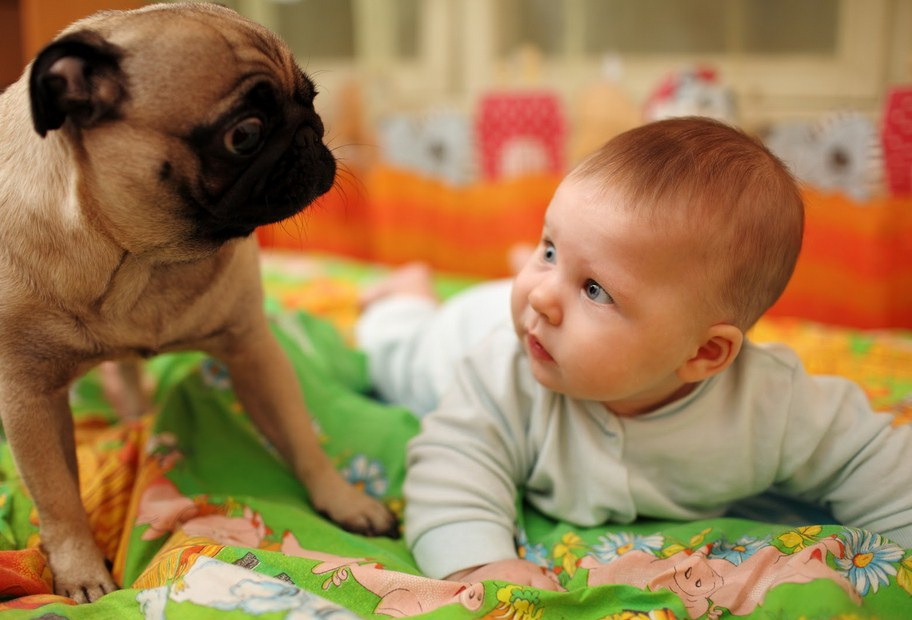 Cute Dog Pictures For Kids