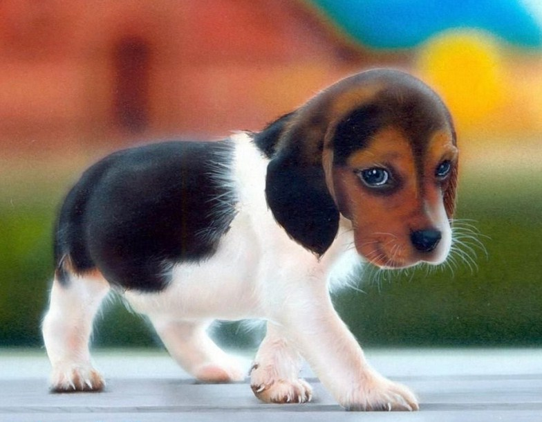 Cute Dogs That Stay Small Forever