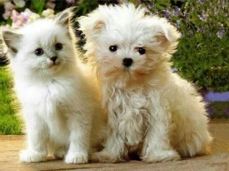Cute Little Dogs And Cats