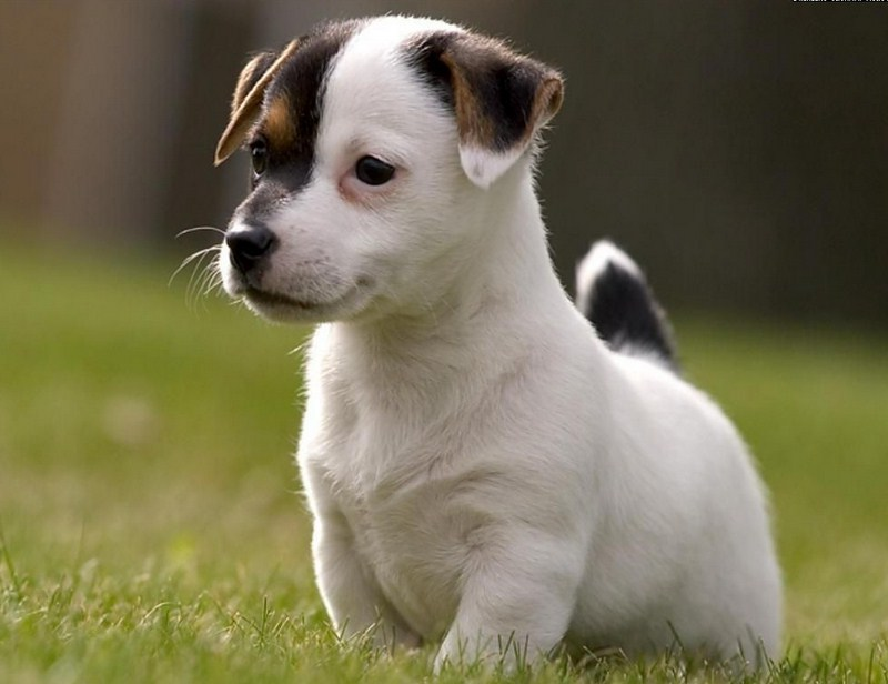 Cute Little Dogs Images